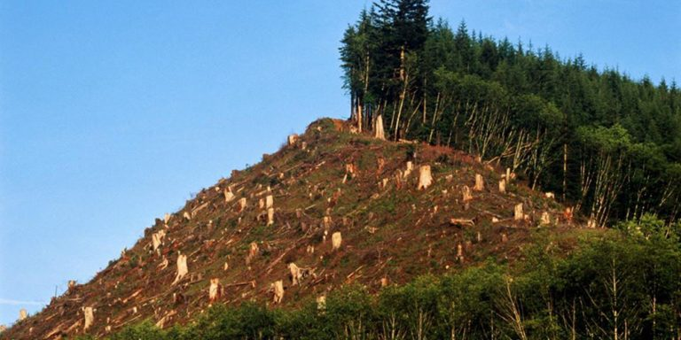 Radarul pădurilor este din nou funcțional, urmărește circuitul materialului lemnos și elimină birocrația