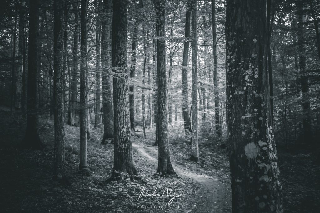 Pădurea Trivale