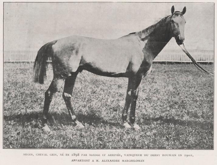 Argeș – primul cal sur din istorie care a câștigat Derby-ul Român