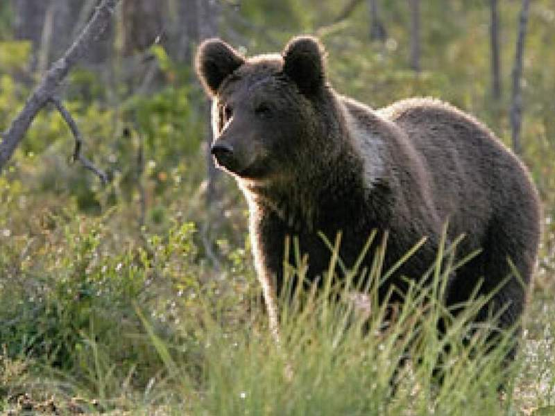 Urs împușcat
